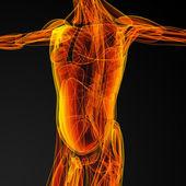 Muž svaly — Stock fotografie
