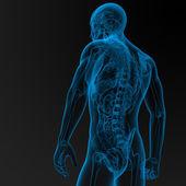Męskiej anatomii — Zdjęcie stockowe