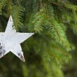 Pine tree with wooden star — Stock Photo