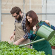 Male and female florist working in a greenhouse — Stock Photo #42891931