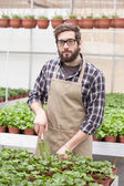 Male florist working indoors — Stock Photo