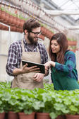 Young adult garden worker in apron using digital tablet at greenhouse — Foto Stock