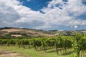 Toscane wijngaarden — Stockfoto