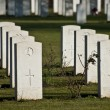 Stock Photo: War cemetery