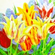 Multi Colored Tulips — Stock Photo