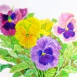 Pansies — Foto de Stock