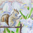 Squirrel and flowers. - Stock Photo