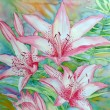 Stock Photo: White Pink Lilies