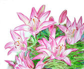 Bush of Pink Lilies — Stock Photo