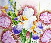 Iris e phloxes in un giardino — Foto Stock