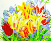 Multi Colored Tulips — 图库照片