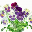 Stock Photo: Bouquet with Claret blue pansies
