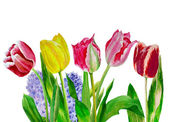Bouquet with yellow and pink tulips — Stock Photo