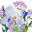 Bouquet with blue and white irises — Stock Photo