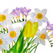 Yellow narcissus and fresia — Stock Photo