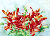 Claret Lilies — Stock Photo