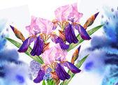 Background with blue irises — 图库照片
