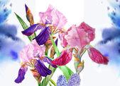 Background with claret blue irises — Stock Photo