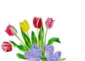 Bouquet with five tulips — Stockfoto
