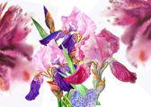Claret background with three irises — Stock Photo