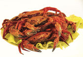 Cooked boiled crabs on the green sheets salad — Stock Photo