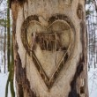 Heart Carved Tree - Stock Photo