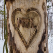 Heart Carved Tree — Stock Photo