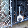 Sad dog poking his head through the fence — Stock Photo