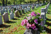 Gravestones in an american Cemetery — Stock Photo