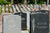Many headstones in a cemetary — Stock Photo