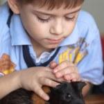 Постер, плакат: Boy and guinea pig