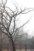 Portrait of tree after rain — Stock Photo