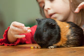 Girl and guinea pig — Stock Photo