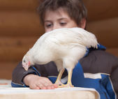 Young hen and boy — Stock Photo