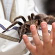 Big hairy tarantula - Stock Photo