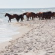 Wild horses on the beach - Stock Photo