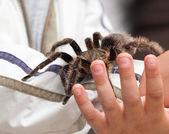 Big hairy tarantula — Stock Photo