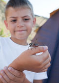 Grasshopper sits on boy's arm — Stock Photo