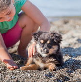 Puppy and girl — Stock Photo