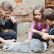 Stock Photo: Children playing with rabbit