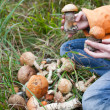Harvest of fresh wild mushrooms — Foto de Stock