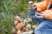 Harvest of fresh wild mushrooms — Stock Photo
