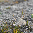 Stock Photo: Frosted leave. Frost on leave