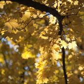 Golden Autumn — Stockfoto