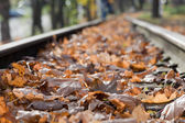Railroad with autumn leaves — Stock Photo