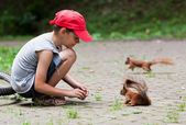 Little boy and squirrels — Stock Photo