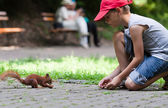 Little boy and squirrel — Stock Photo