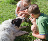 Children and the dog in grass — Stock Photo