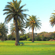 Palm trees in parkland — Stock Photo