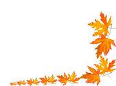 Autumn leaf border isolated — Stock Photo